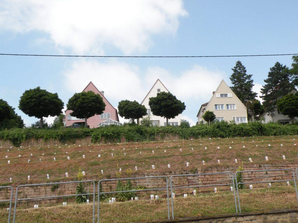 Weinberge und Wohnhäuser in Stuttgart